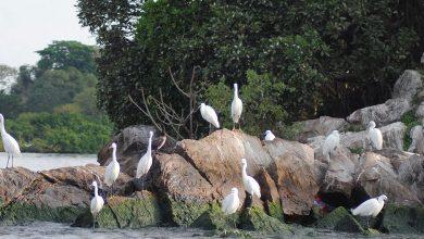 Photo of Rubondo Island National Park